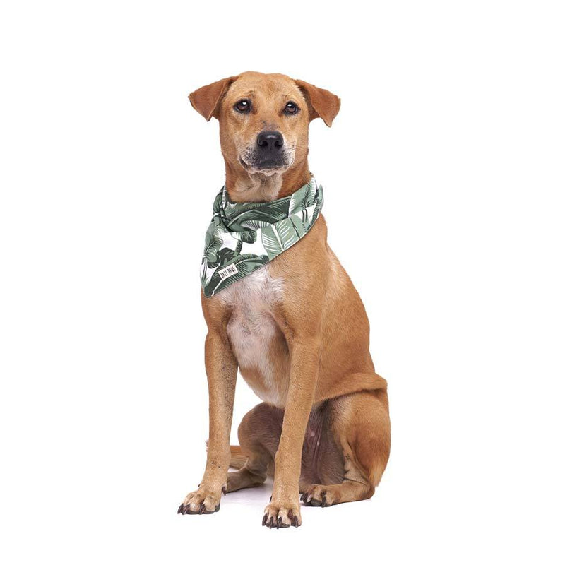 The Paws Into The Wild Bandana - CreatureLand