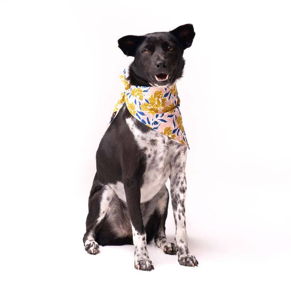 The Paws Kona Bandana - CreatureLand