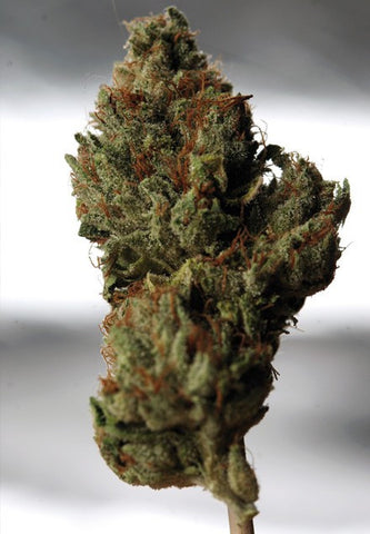Cold Creek Kush Cannabis Seeds