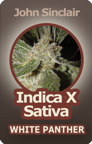 White Panther Feminized Cannabis Seeds