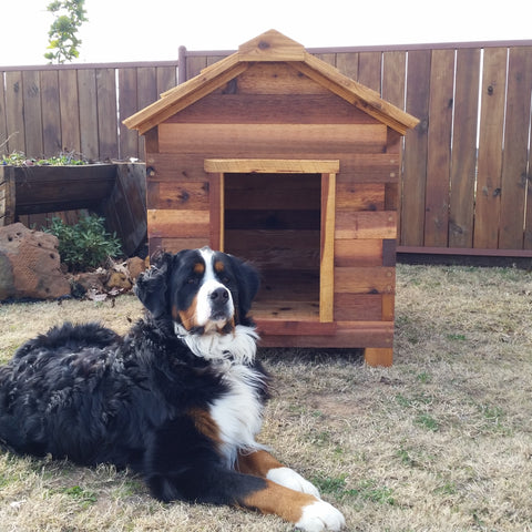Elevated Feeders & Dog Houses