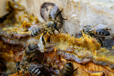 20 Benefits of propolis you didn't know about