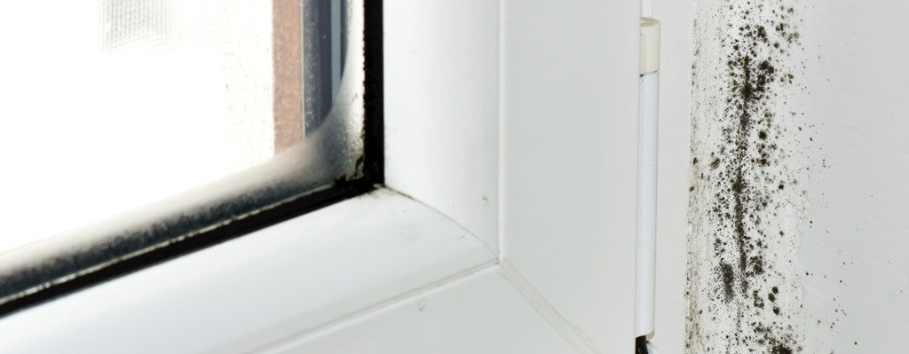 Why You Need To Know (Immediately) If There's Mold In Your Home