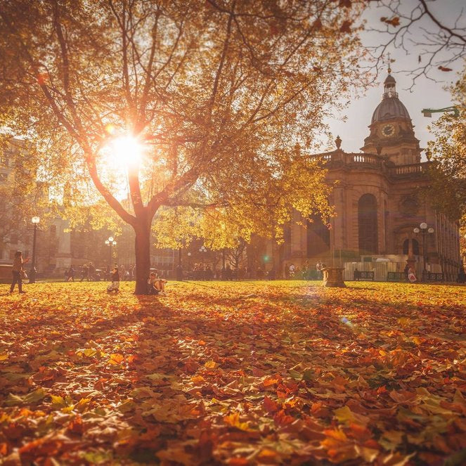 5 Tips for Making the Most out of Autumn Photography with Ross Jukes