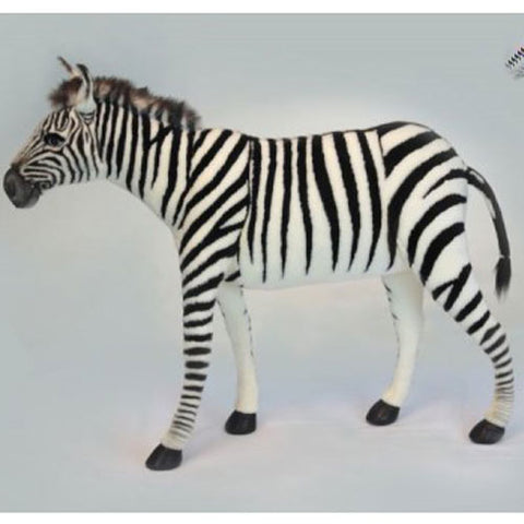 xander the zebra shown in black and white stripe with furry mane shown standing upright