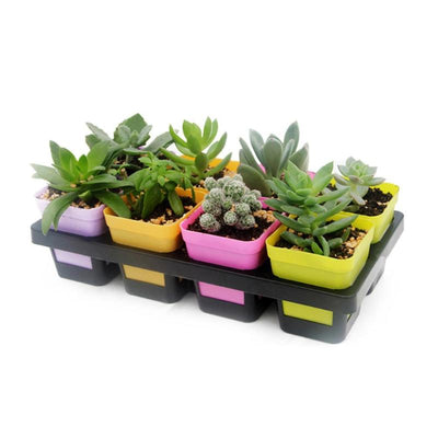 8 Cells Grid Plastic Flowerpot Plant Pot Succulant Planter Seed Tray for Cactus Succulant Bean Sprouts Seedlings Small Flowers