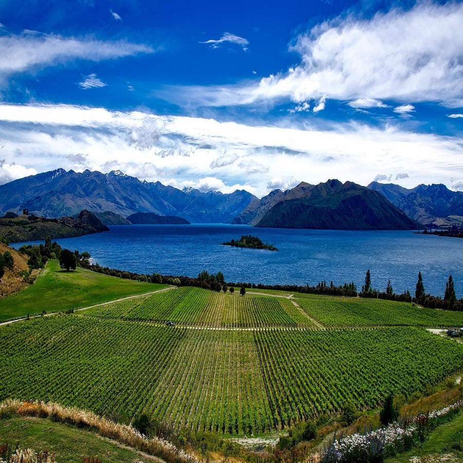 Saint John's Hill - 22nd October 2020 - Discover The Wines of New Zealand