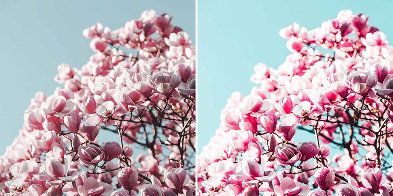 Bright Raspberry Lightroom Presets For iPhone, Android, Mac and PC