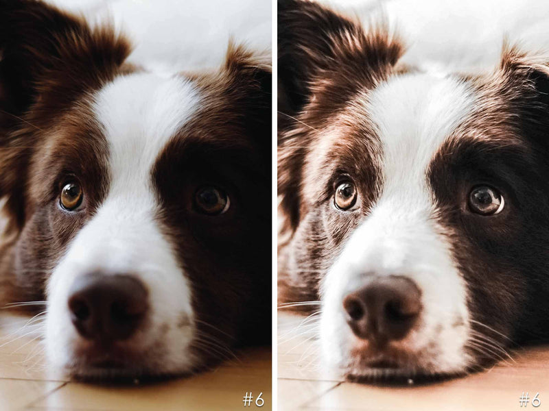 Chocolate Friends Presets For Brown Dogs In Lightroom And Photoshop