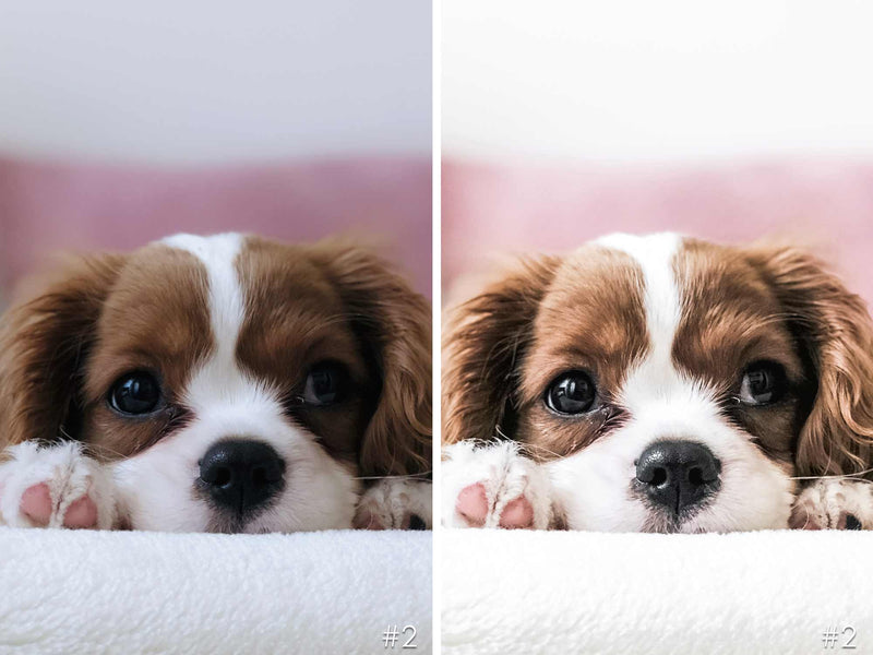 Chocolate Friends Dogs Presets For Lightroom And Photoshop