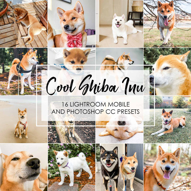 Cool Shiba Inu Lightroom Presets For Dogs And Pets