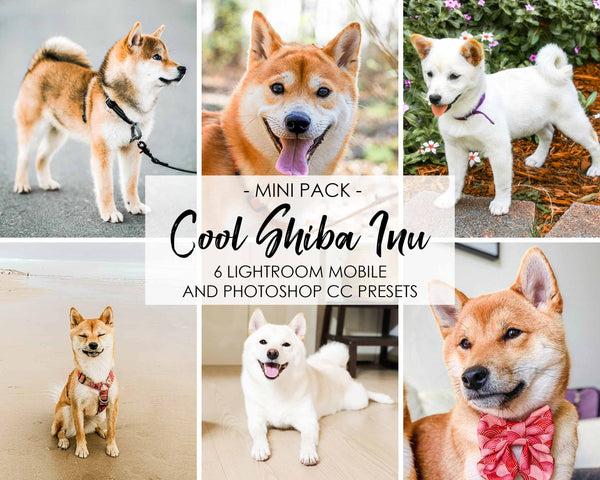 Cool Shiba Inu Lightroom Presets For Dogs And Pets Of Instagram And Facebook