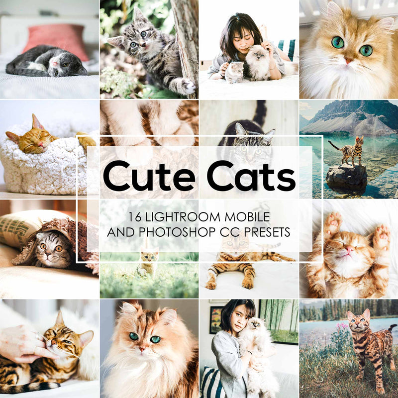 Cute Cats Lightroom Presets Pack