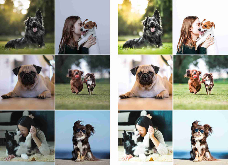 Happy Dogs Lightroom Presets for iPhone and Android