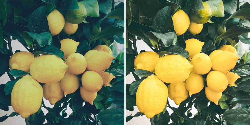 Juicy Yellow Presets For Lightroom And Photoshop
