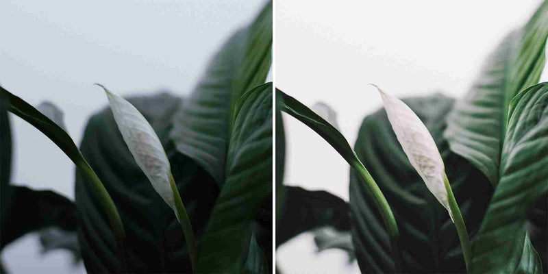 Lush Green Lightroom Presets For iPhone, Android, Mac and Pc