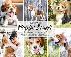 Playful Beagle Dogs Presets For Lightroom And Photoshop