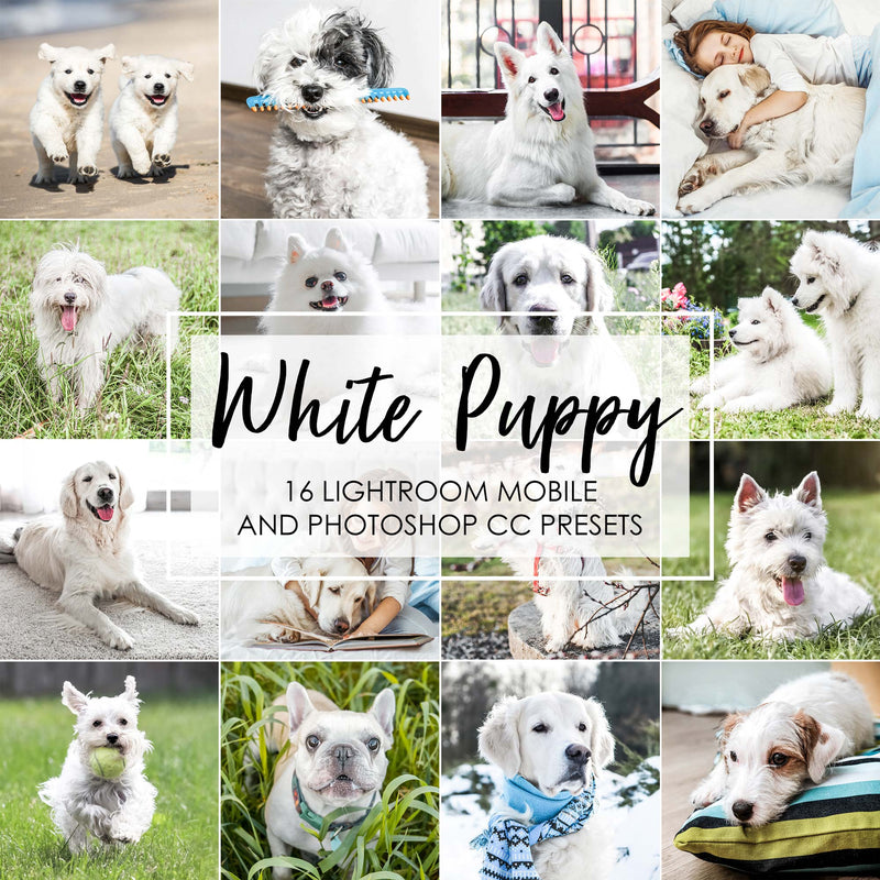 White Puppy Lightroom Mobile and Desktop Presets For Dogs, Pets and Animals