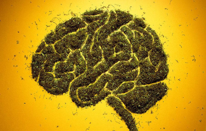 Lancet Psychiatry Finds Link Between Daily Cannabis Use & Psychosis