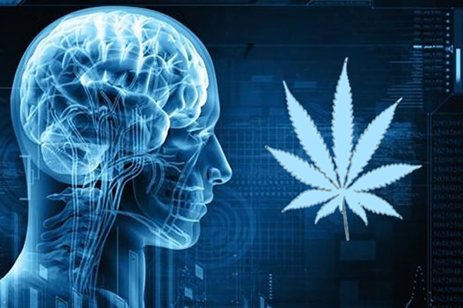 Endocannabinoid System: Cannabis & Your Brain on Drugs