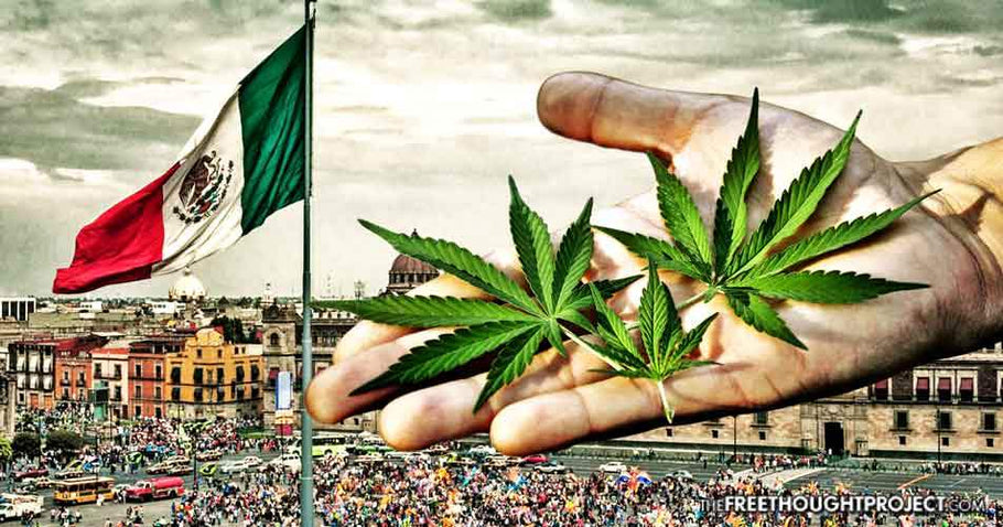 Mexican Senate Releases Report on How to End Cannabis Prohibition