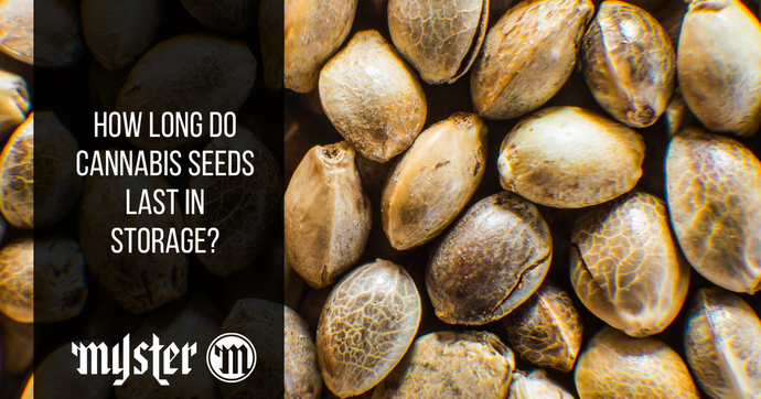 How Long Do Cannabis Seeds Last In Storage?