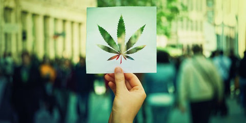 Hand holding paper with a print of Cannabis leaf