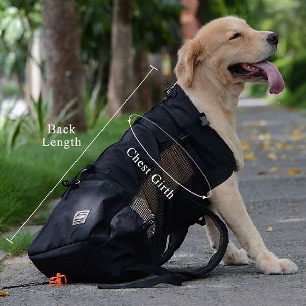 Dog backpack carrier size