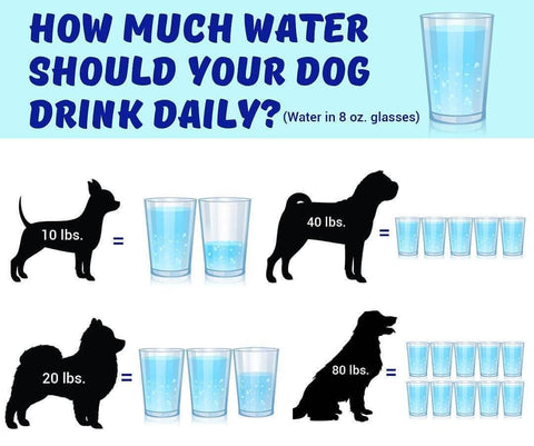 how much water dog needs