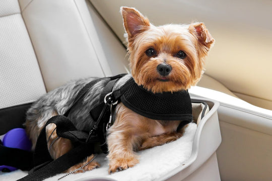 which dog seat belt is best