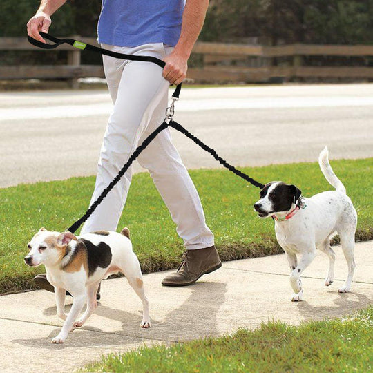 Bungee leashes for two dogs