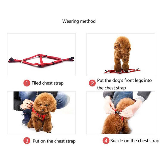 harness leash combo