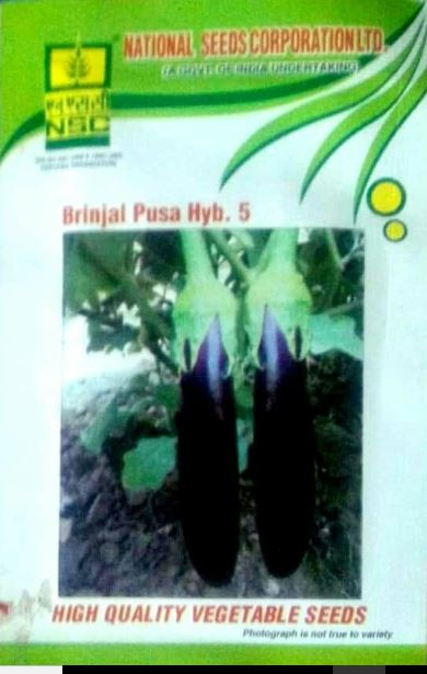 NSC Brinjal(बैंगन) - Pusa Hybrid 6- 10gm( Price include Procurement & Handling)