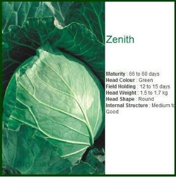 Seminis ZENNITH CABBAGE-50(5*10)GM