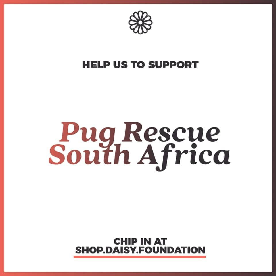 Year-end fundraiser - Resources for Pug Rescue South Africa