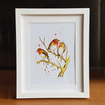 Robins 8x10 inch Box Framed Print