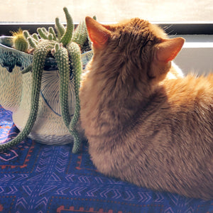 cactus cat feline planter plant meow friend