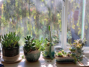 a wondrous indoor garden