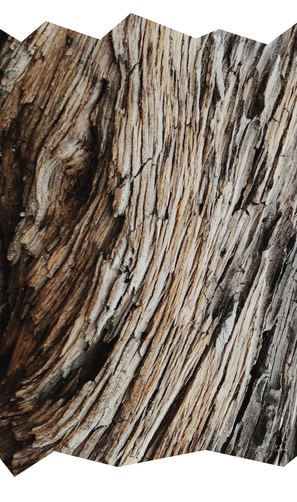 texture wood weathered inspiration ceramics nature design world outer limits Joshua Tree desert