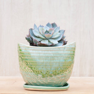 Saucer Only - Large Planter