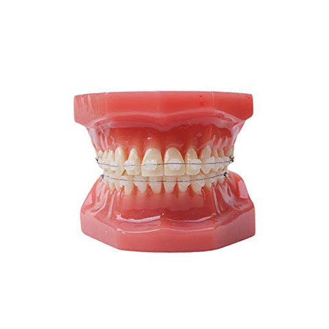 Dental Typodont With Ceramic Brackets Orthodontic Braces Teeth Model,28pcs Teeth Ceramic Braces Model For Teaching Practice