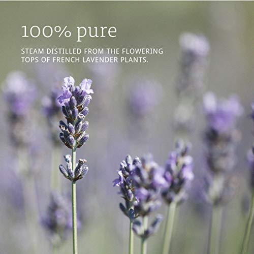 Now Essential Oils, Lavender Oil, Soothing Aromatherapy Scent, Steam Distilled, 100% Pure, Vegan, Ch