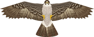 Hawk Kite Bird Scarer Guide