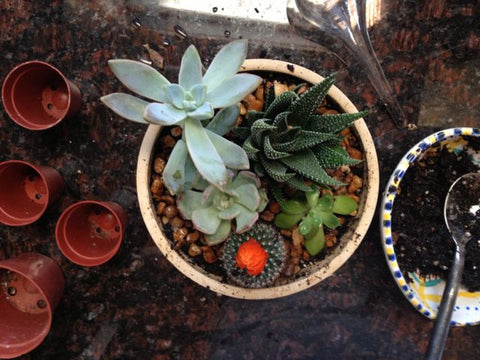 Create your own succulent pot for indoor enjoyment