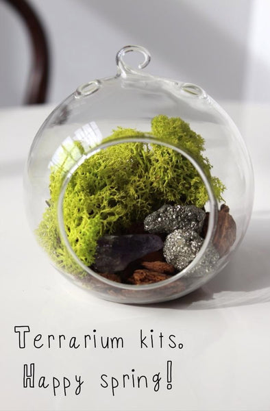 DIY terrarium kits made by Bird and Feather available at Bomisch.
