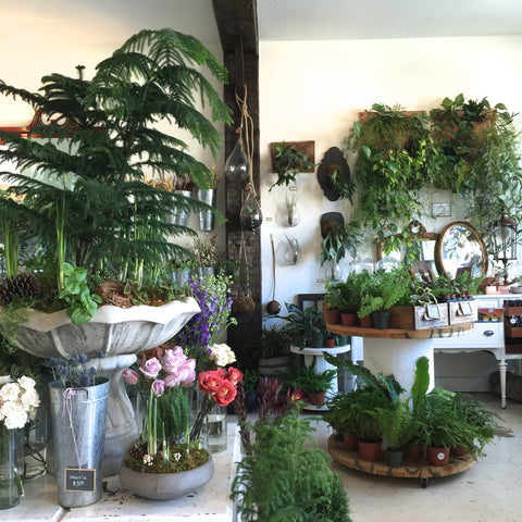 Flora is a fun spot to spend a browse and bring home fresh greenery