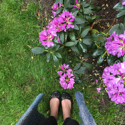Spring blooms at my feet. Oh how I love the spring!