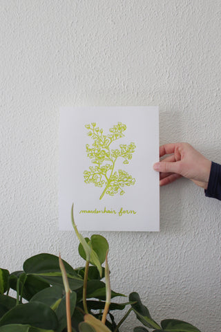 Maidenhair Fern Print, Hand Illustrated