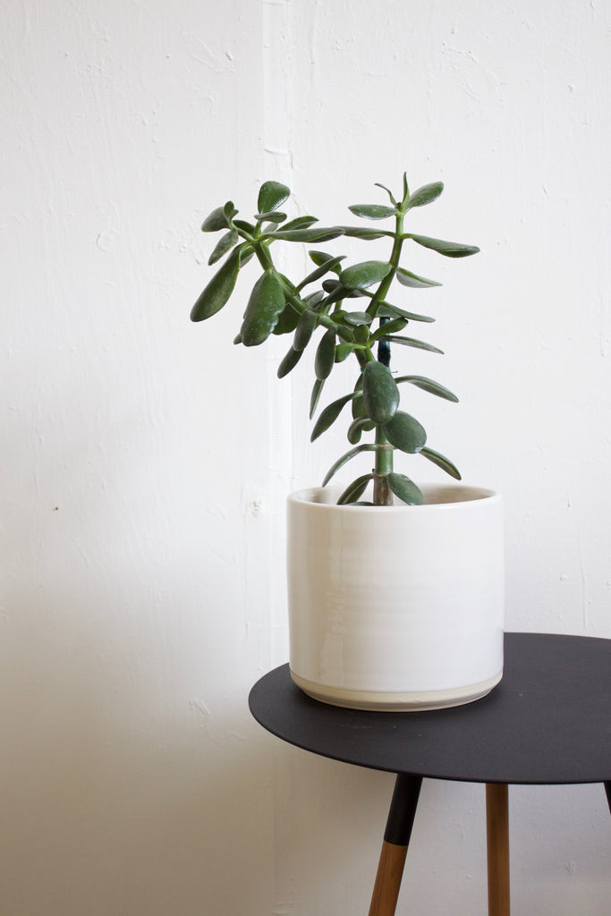 Glossy white hand thrown ceramic planter made in California.
