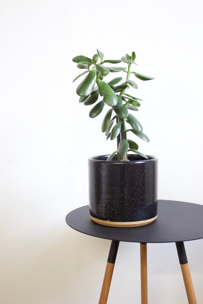 Speckled black ceramic planter made in California, USA.